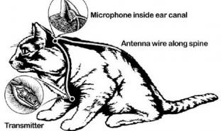 قد تستلطفهم أنت.. لكن «سي آي إيه» كونت «جيش القطط» بغرض التجسس!