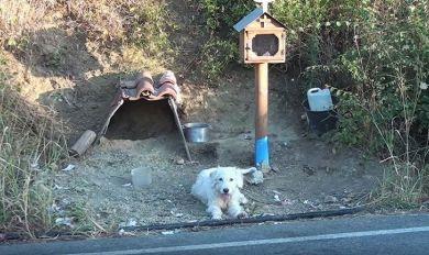 """عام ونصف العام.. كلب """"ينتظر"""" صاحبه في المكان نفسه!"""